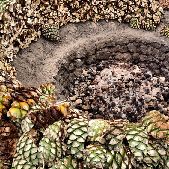 The ancient Mezcal production process.